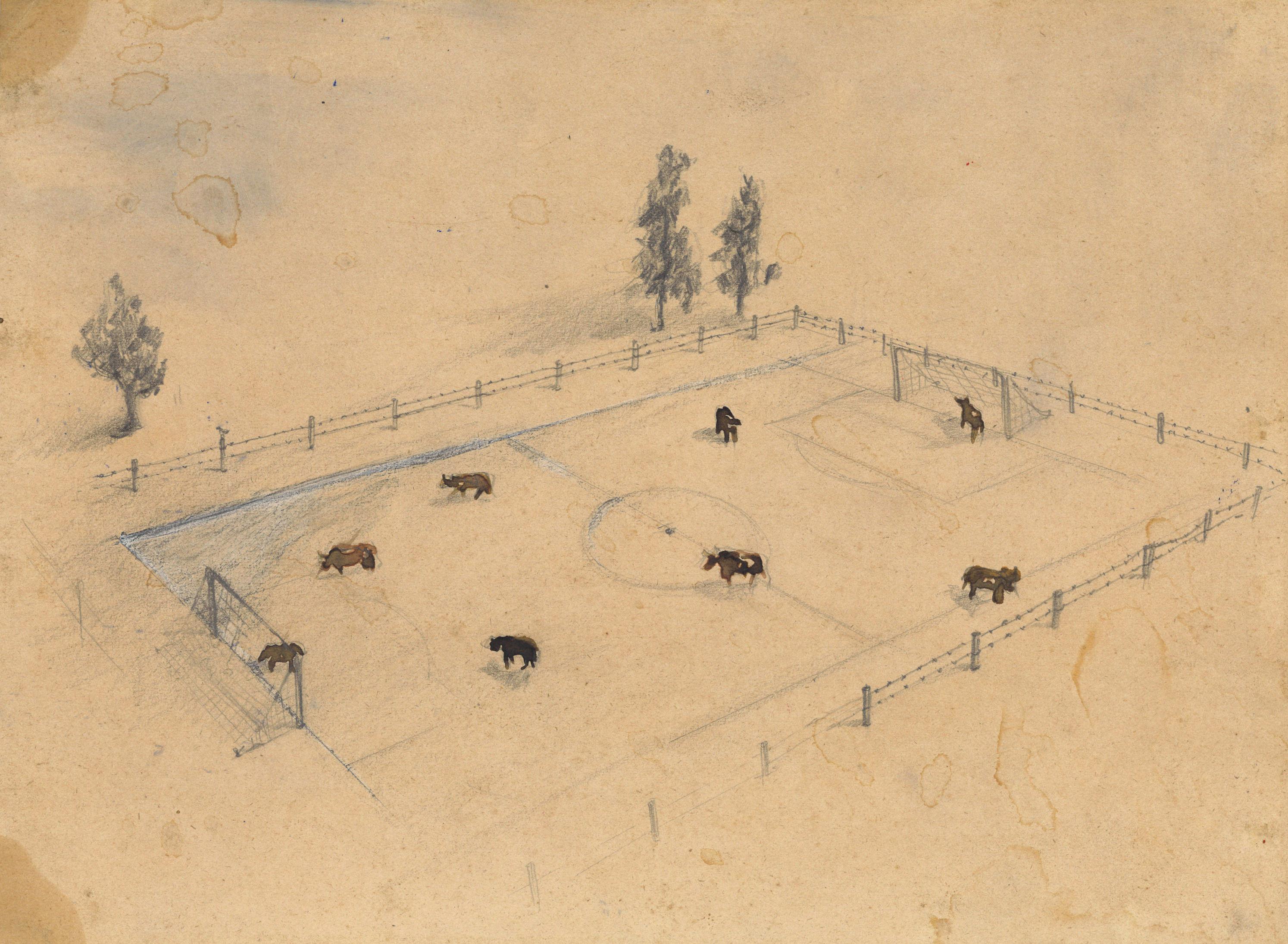 cow-football